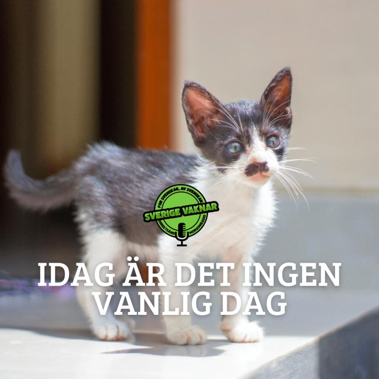 Idag är det ingen vanlig dag (Sverige vaknar #357)