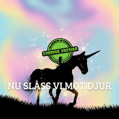 Nu slåss vi mot djur (Sverige vaknar #369)